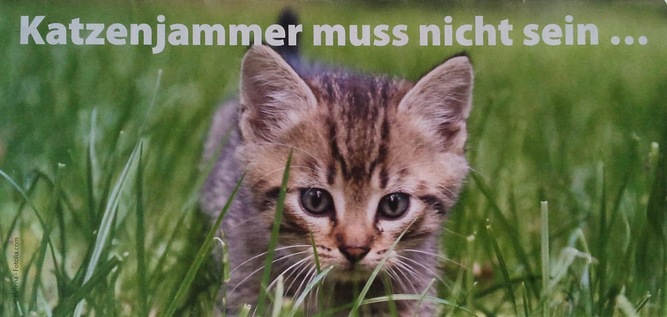 http://www.tierhilfe-dinslaken-voerde.eu/wp-content/uploads/2016/01/Katzenjammer-muss-nicht-sein.jpg