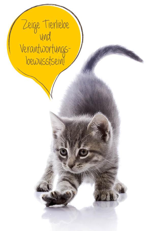 tierhilfe_Katze1